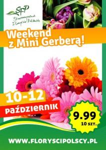 Weekend zMini Gerberą