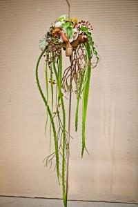 Wystawa kaktusów isukulentów wLublinie