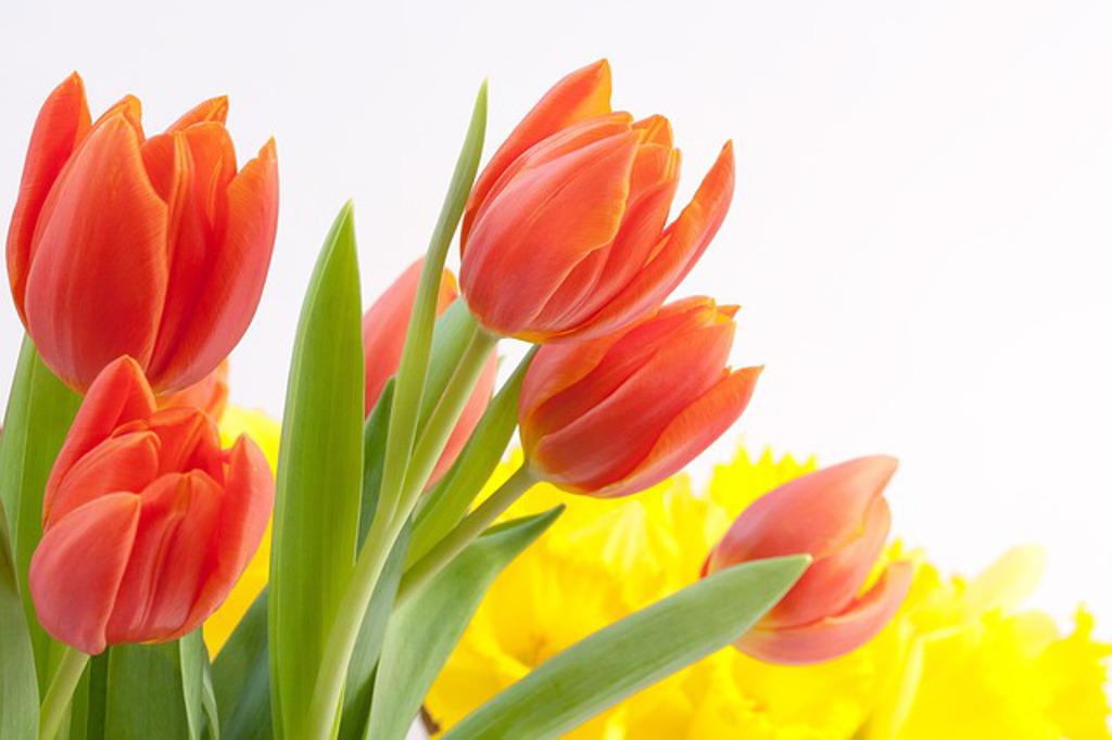 Weekend z Tulipanem