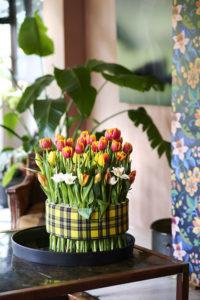 Tulipany-kratka